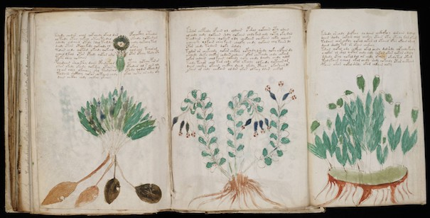 Le manuscrit Voynich