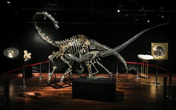 2167688_deux-ventes-aux-encheres-consacrees-aux-dinosaures-vont-avoir-lieu-a-paris-web-tete-0301541412337